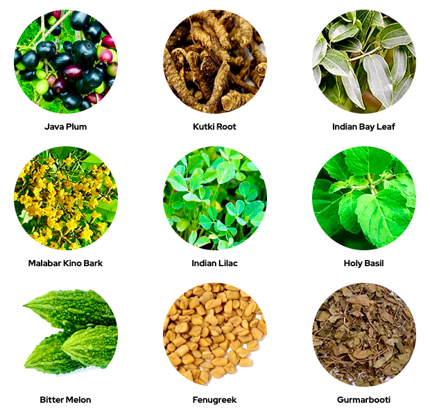CLE Holistic Health Blood Sugar Support Ingredients